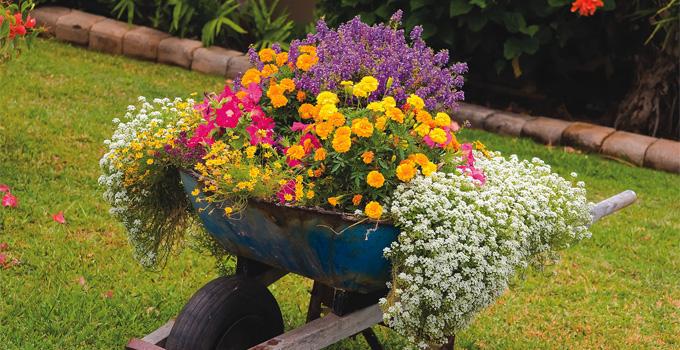 Bahçenize Renk Katacak Çiçekler