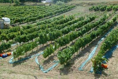 Organik Sebze Yetiştirmenin Püf Noktaları