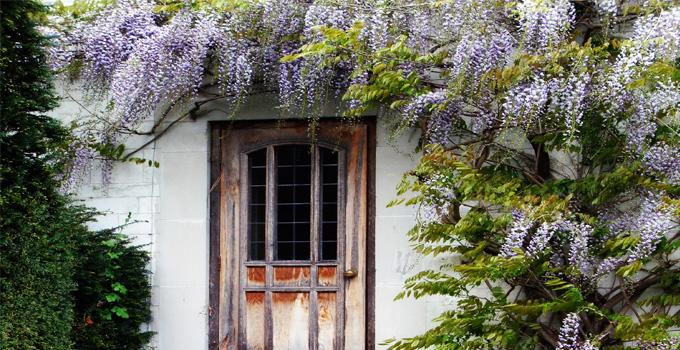Balkonlarınızı süsleyen sarmaşıklar